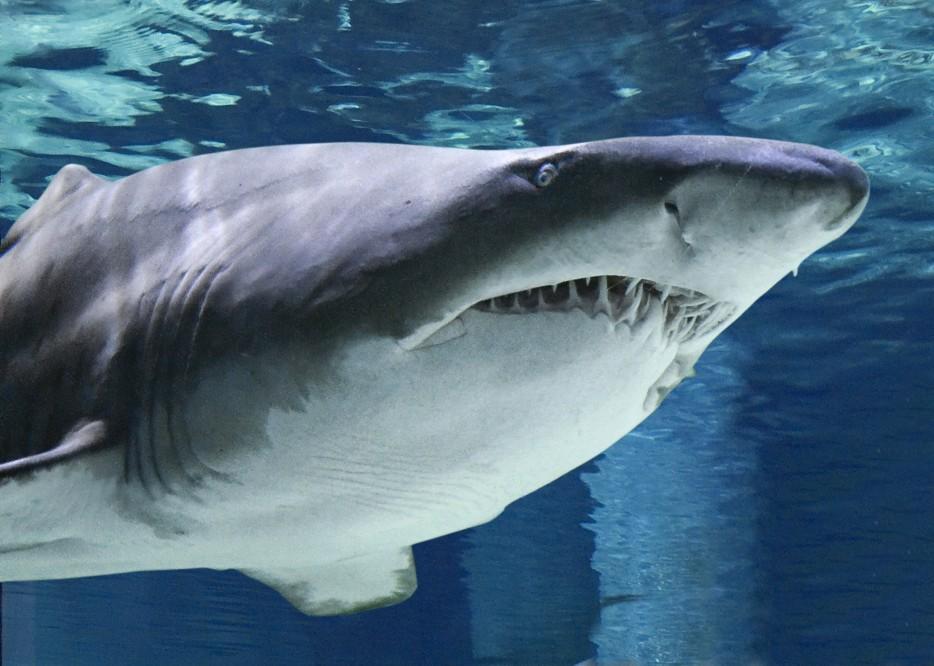 cattolica squali