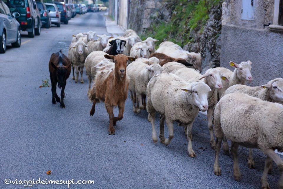 Cosa vedere a Scanno, la pastorizia